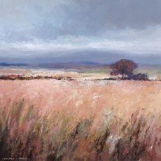 sjf-purbeck-heath-view